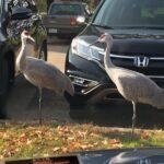 cranes-lot